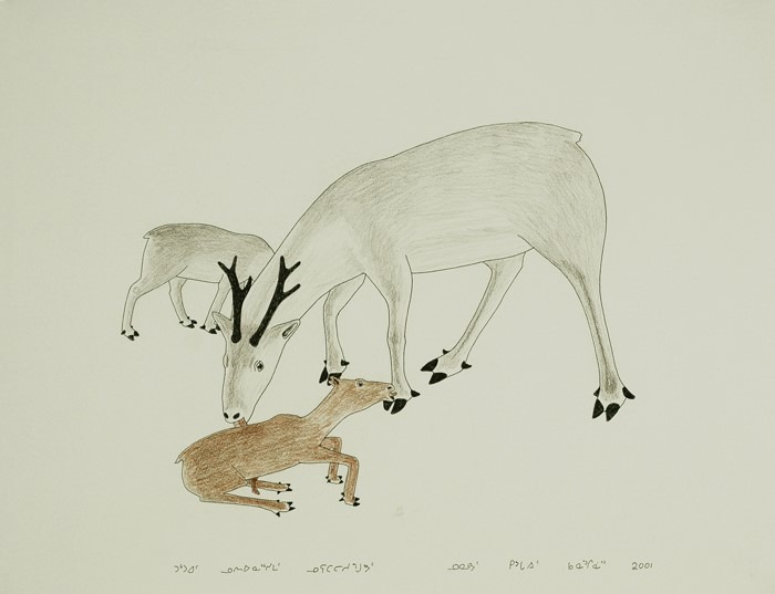 Kananginak Pootoogook drawing mother and calves cape dorset fine arts